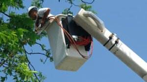 bucket lift tree pruning provided by trained tree service employee