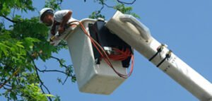 bucket lift tree pruning for out of reach branches by trained tree service staff member