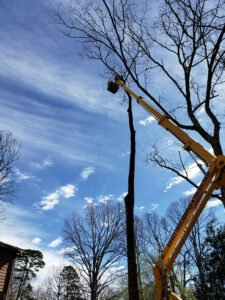 Spider Lift being used to provide tree pruning for high up branches