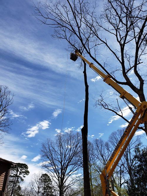 tree services Loganville