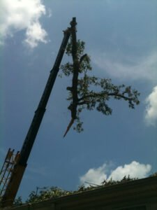 Crane removing top half of tree to ensure protection of a residents home