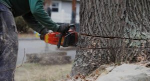 orange chainsaw operated by trained arborist to remove a tree