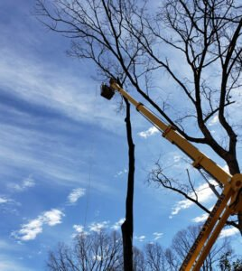 Spider lift used to trim and remove out of reach branches for safety