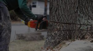 tree service employee using chainsaw to cut down a tree