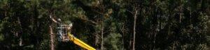 Bucket lift tree pruning provided by arborist