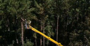 Pine tree pruning using bucket lift provided by trained arborist