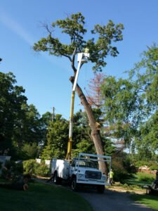 Bucket lift attached to a truck being used to trim the top of a tree