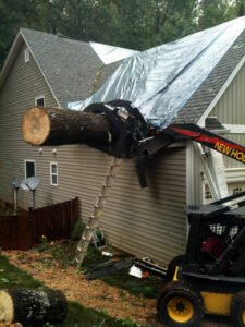 removal of a tree that fell into a home causing minor damages