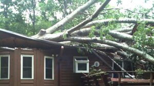 large tree fell through a home causing massive property damage