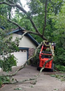 storm damage cleanup and removal of fallen tree