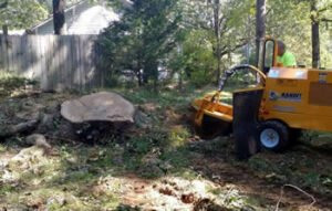 stump grinding being provided by a trained tree service professional