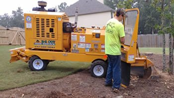 tree removal services near me Lawrenceville