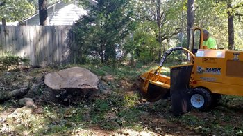 tree removal costs Buford