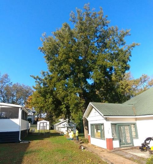 affordable tree companies Grayson