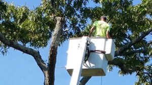 bucket lift tree pruning service provided by trained professional
