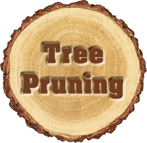 Tree Pruning Services Near Me