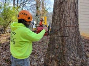 Tree removal provided by tree service company staff