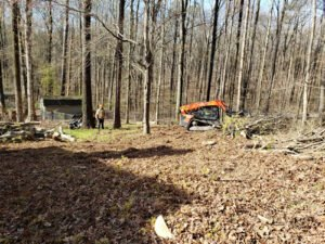 tree service employees clearing a lot and removing underbrush