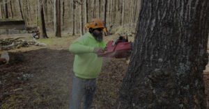 Man using a red chainsaw to cut down a tree in a fenced yard
