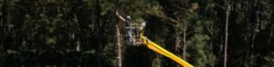 Employee in yellow bucket lift trimming pine trees in the woods