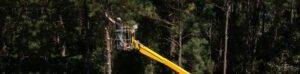 tree service employee using yellow bucket lift to trim pine trees