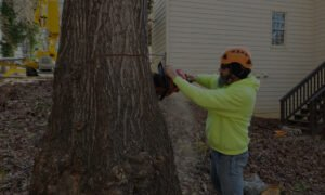 tree service staff member using red chainsaw to remove a tree within a residents backyard