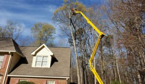 tree service employee using a spider lift to prune high branches