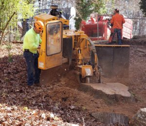 stump grinding services provided by a tree service employee