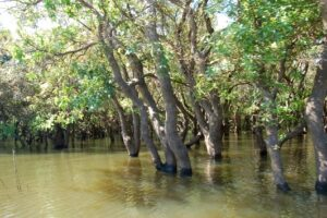Effects of flooding on trees